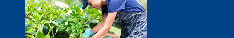 Diplomatura en Jardineria Chivilcoy